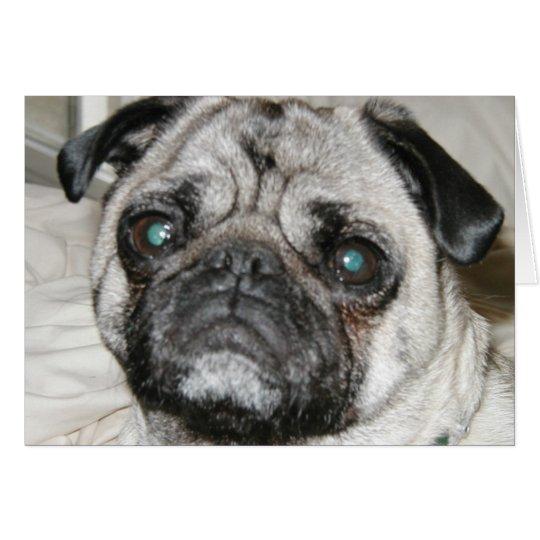 pug face card