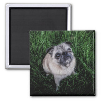 Pug in Grass (Digital Painting) Square Magnet