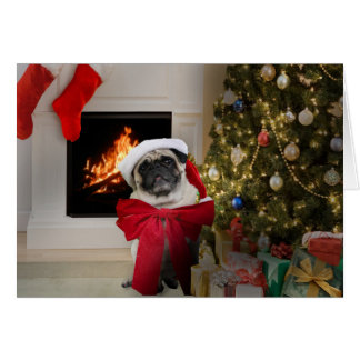 Pug Misha wearing only a bow for Christmas Card