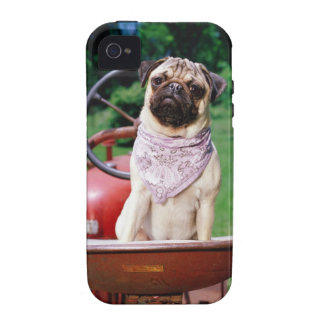 Pug on lawnmower wearing bandana Case-Mate iPhone 4 cases