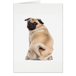 Pug peeking card