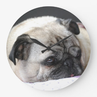 Pug pug Carlin ~ photo Jean Louis Glineur Wallclock