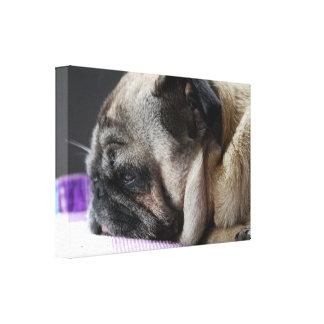 Pug pug - Photography Jean Louis Glineur Canvas Print