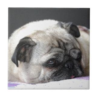 Pug pug - Photography: Jean Louis Glineur Tile