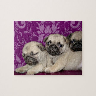 Pug puppies dog jigsaw puzzle