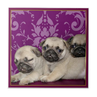 Pug Puppies Tile
