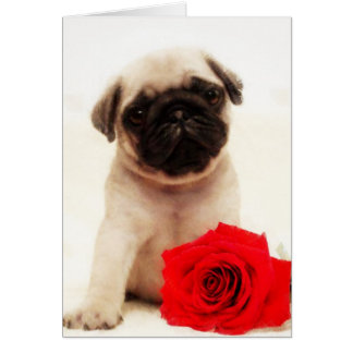 Pug puppy and rose greeting card