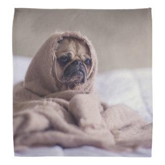 Pug puppy Dog Cuddling in a warm towel Blanket Bandana