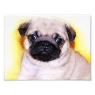Pug Puppy Photo Art