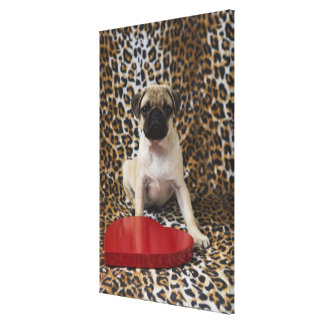 Pug puppy sitting against animal print