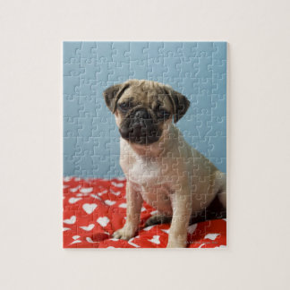 Pug puppy sitting on bed puzzle