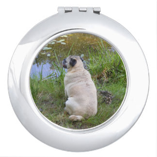 Pug Sitting By A Pond Compact Mirror