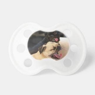 Pug Yawn Dummy