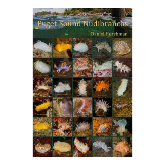 Puget Sound Nudibranchs Poster