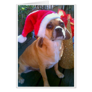 Puggle! Christmas Card
