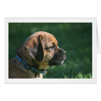 puggle profile card