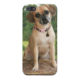 Puggly & Confused Case For The iPhone 5