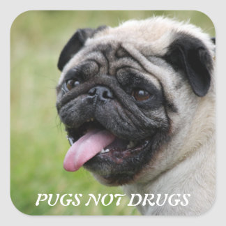 Pugs not drugs,  pug dog  photo sticker, stickers