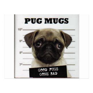 Pugs Postcard