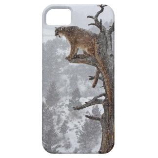 Puma in Tree iPhone 5 Case