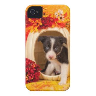 Pumkin Puppy Case-Mate iPhone 4 Case