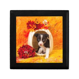 Pumkin Puppy Small Square Gift Box