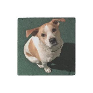 Pumpkin Doggie Stone Magnet