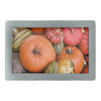 Pumpkin Harvest R01.1.2 Rectangular Belt Buckle