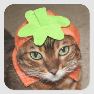 Pumpkin Hat Cat Square Sticker