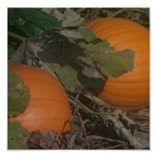 Pumpkin on Vine Poster