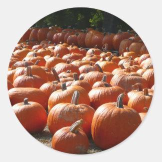 Pumpkin Patch Autumn Harvest Photography Round Sticker