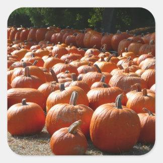 Pumpkin Patch Autumn Harvest Photography Square Sticker