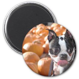 Pumpkin Patch Boston Magnet