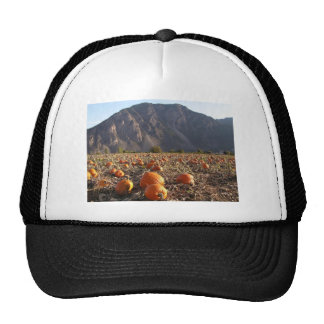 Pumpkin Patch Cap