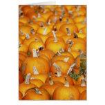 Pumpkin Patch Note Card