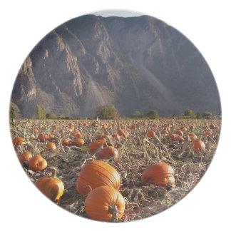 Pumpkin Patch Party Plates