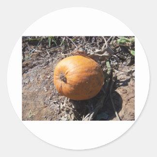 pumpkin patch round stickers