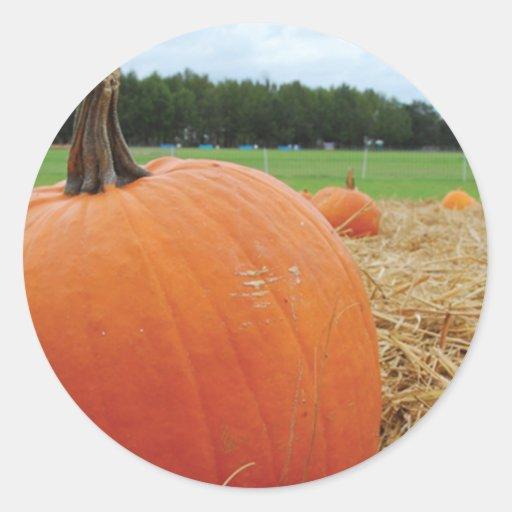 Pumpkin Patch Round Sticker