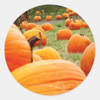 Pumpkin Patch Classic Round Sticker