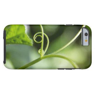 Pumpkin Vine Phone Case Tough iPhone 6 Case
