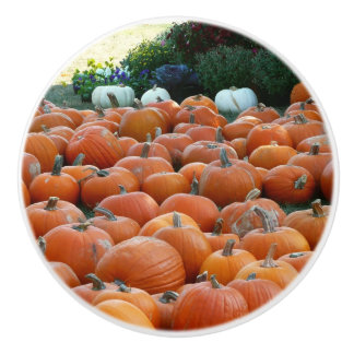 Pumpkins and Mums Autumn Harvest Photography Ceramic Knob