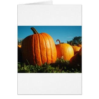Pumpkins_Hancock_Shaker_village_2418 Card