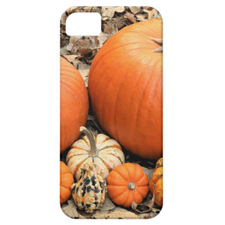 Pumpkins In Leaves Case For The iPhone 5