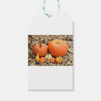 Pumpkins In Leaves Gift Tags