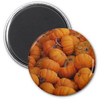 pumpkins magnet