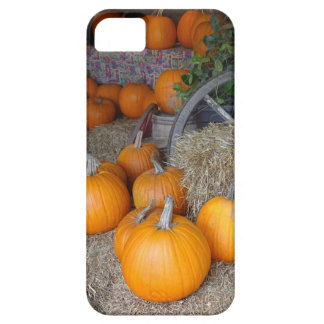 Pumpkins on Straw Case For The iPhone 5