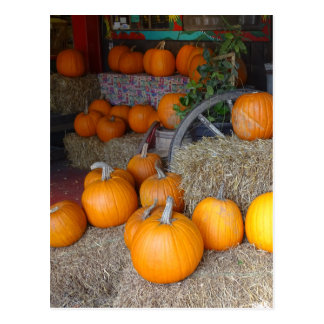 Pumpkins on Straw Postcard