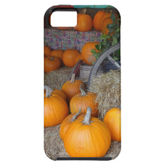 Pumpkins on Straw Tough iPhone 5 Case