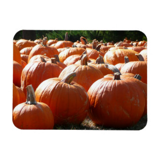 Pumpkins Photo for Fall, Halloween or Thanksgiving Magnet
