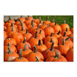 Pumpkins Photo Print